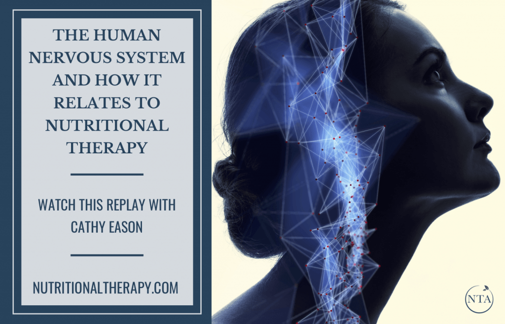 The Human Nervous System And How It Relates To Nutritional Therapy