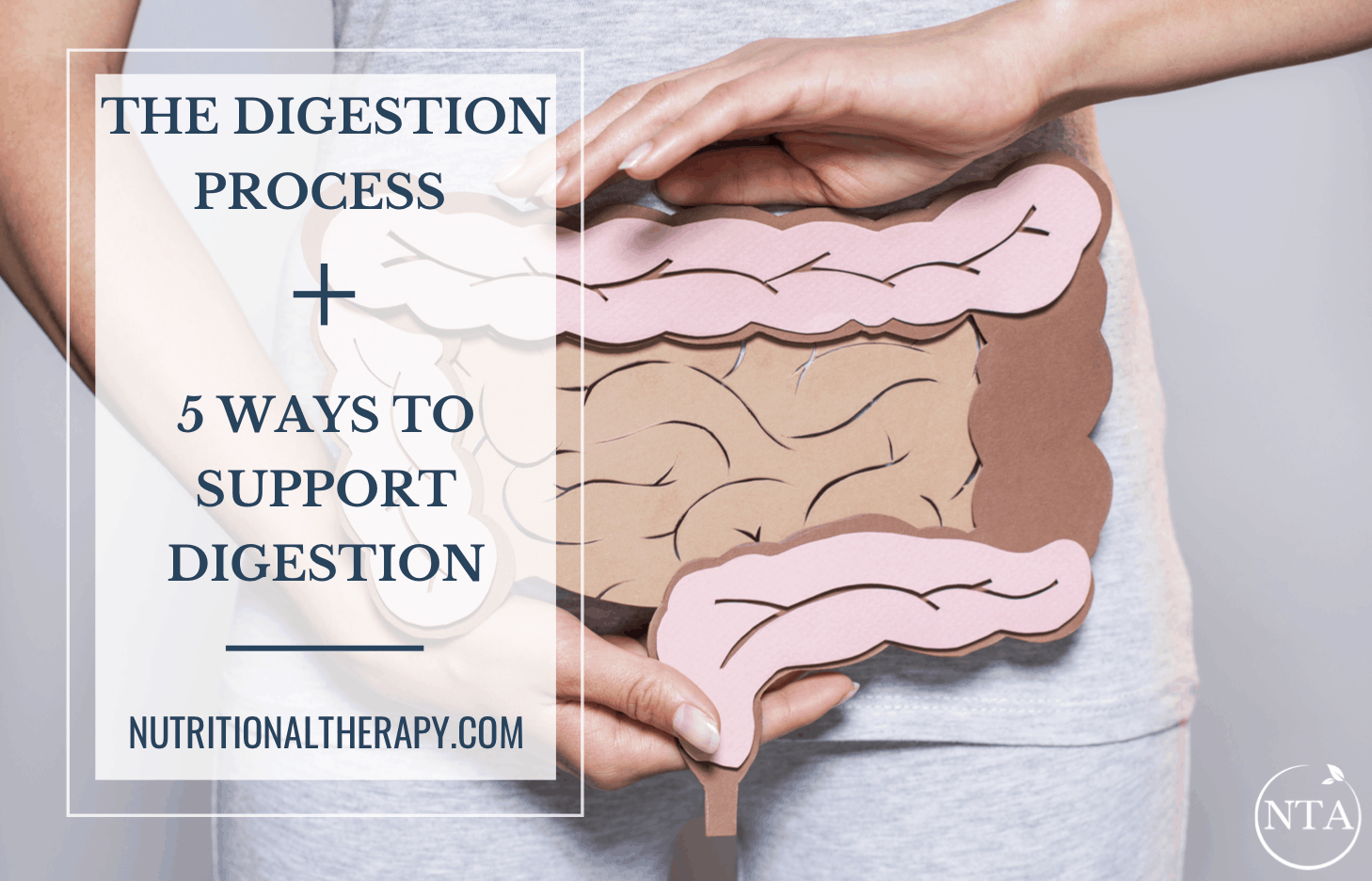The Digestion Process And 5 Ways To Support Digestion